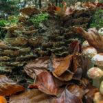 Herbst Fotospaziergang bei Nebel im Wald Weiz Raabklamm Raab