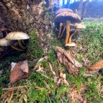 Fotospaziergang im Herbst Teil 2 in der Raabklamm Weiz