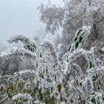 Fotospaziergang bei Wind und Eis im Wald