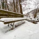 Fotografieren bei Schnee im Wald