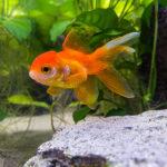 Quicktipp #23 Fische im Aquarium #SmartphoneFotografieBuch