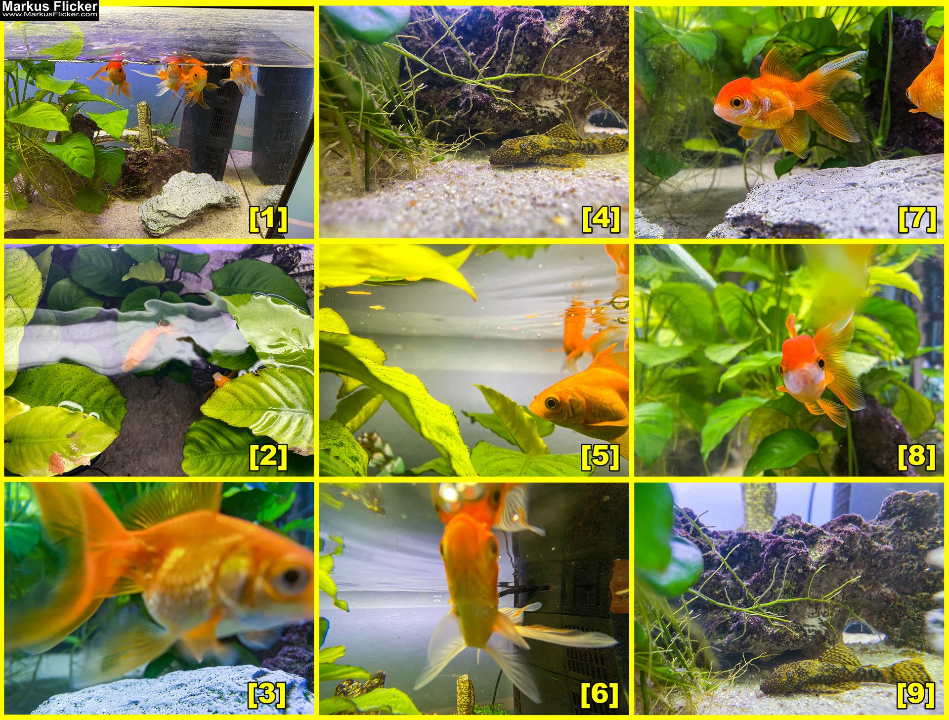 Fische im Aquarium fotografieren