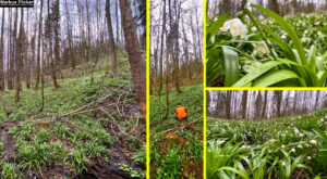 Quicktipp #2 Vor lauter Bäumen den Wald nicht mehr sehen #SmartphoneFotografieBuch