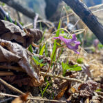 Fotospaziergang Frühling in der Raabklamm