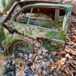 Ein VW Käfer im Wald