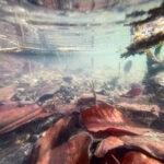 Wie macht man Unterwasser Fotos mit dem Handy / Smartphone?